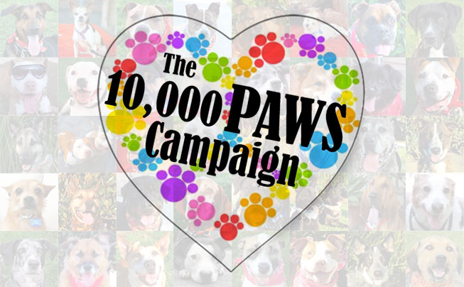 The 10,000 Paws Campaign